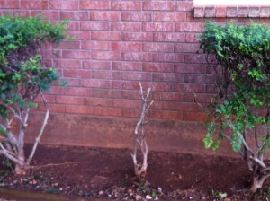 denuded bush