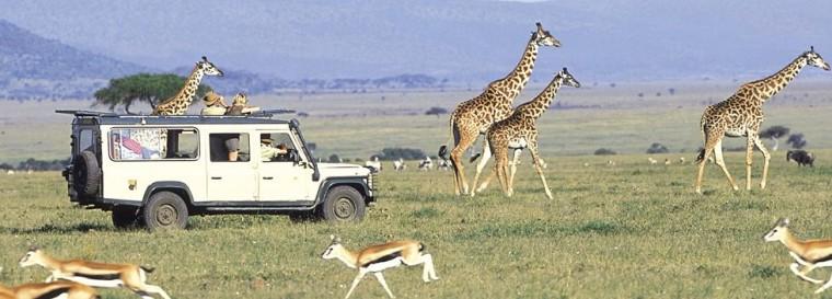 980x353_kenya-accommodation-